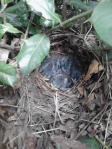 Bird nest in bushes
